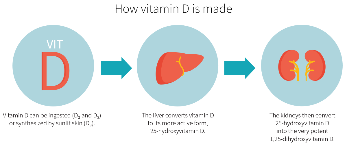 How vitamin D is made