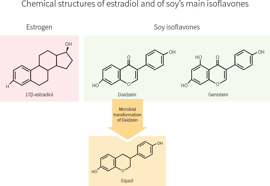 chemical structures of estradiol and of soy's main isoflavones