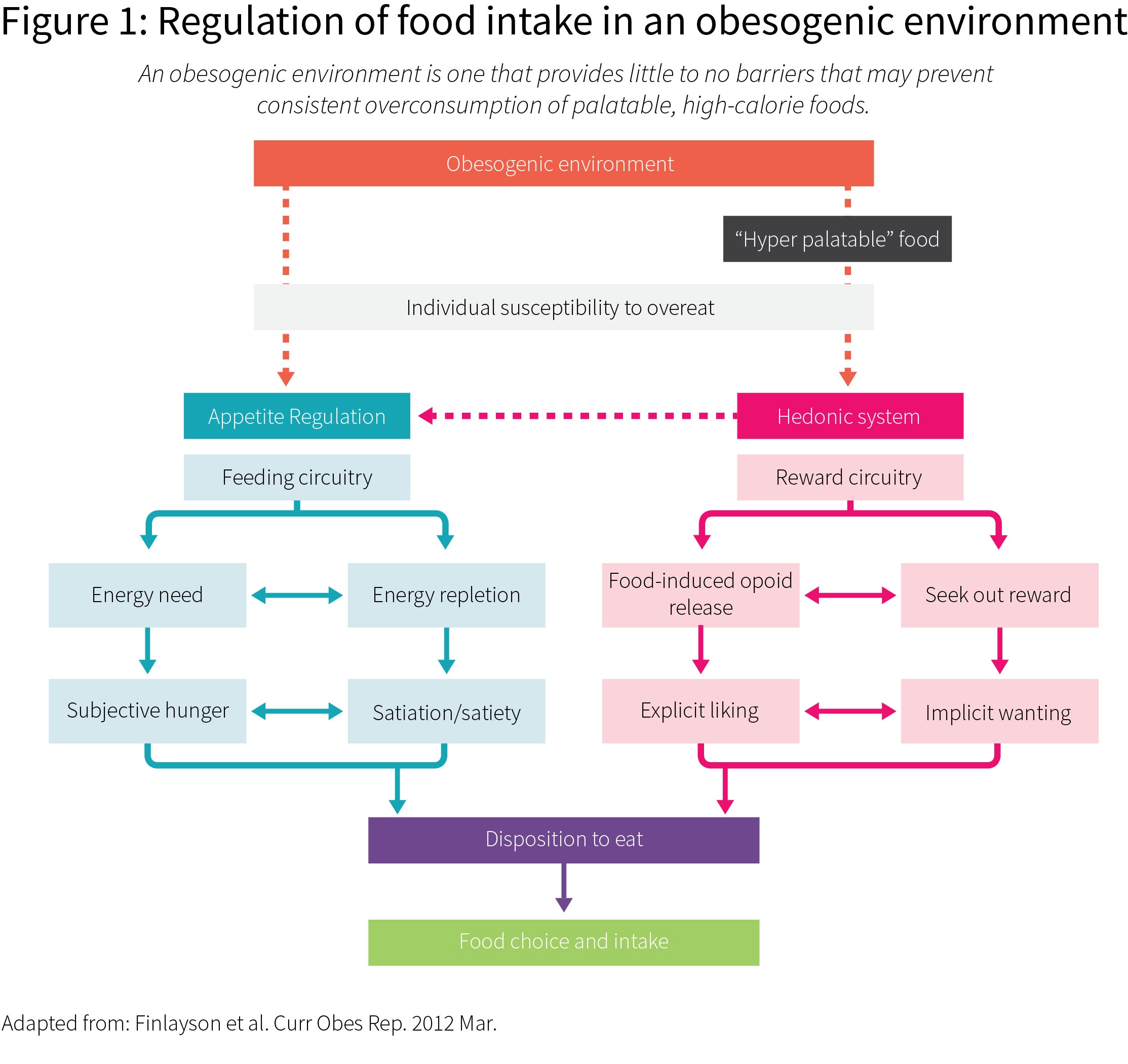 Systematising satiety: How to optimise your diet to manage hunger