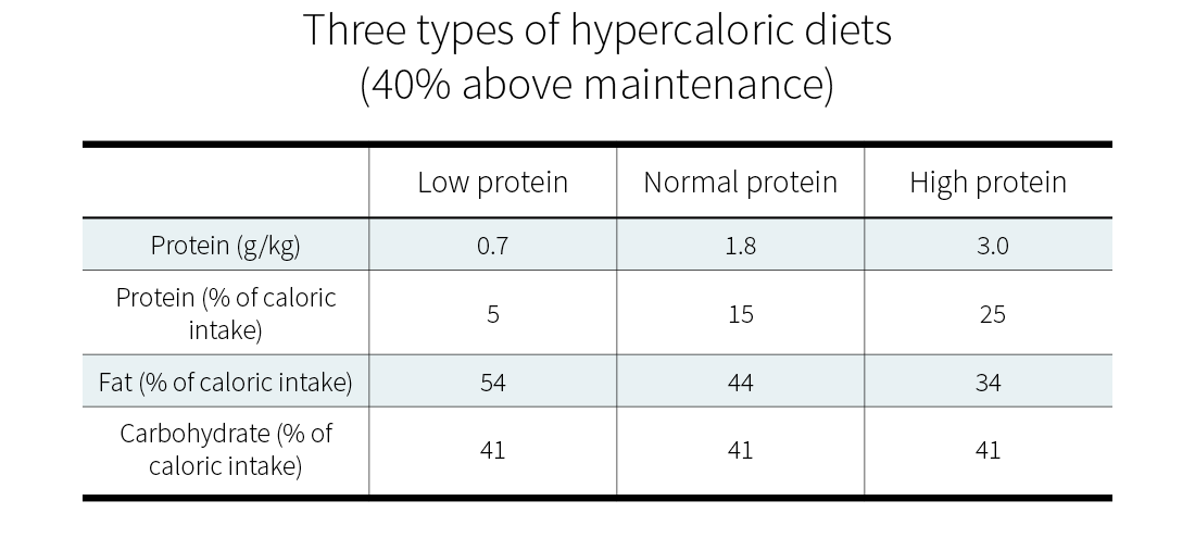 Protein intake: three types of hypercaloric diets